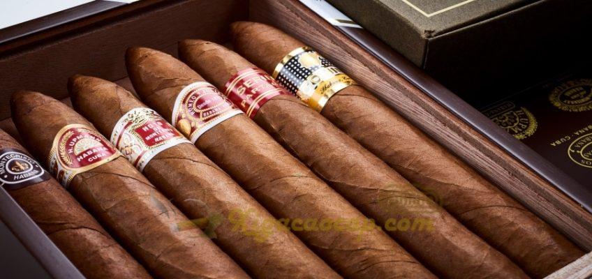 6 điếu xì gà được lựa chọn từ những lá xì gà ngon nhất của từng thương hiệu